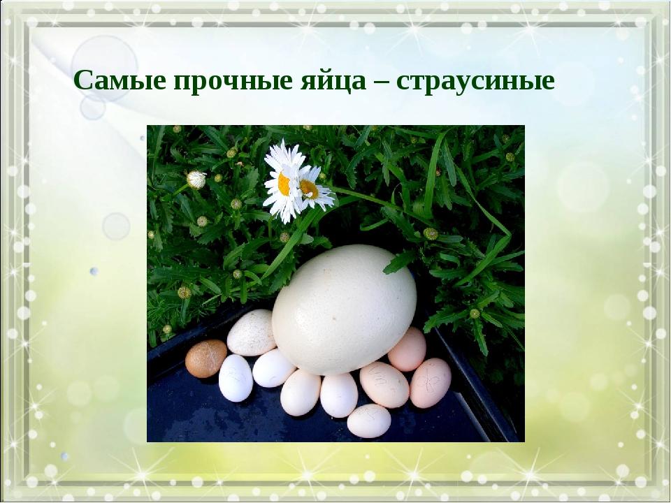 Самые прочные яйца – страусиные