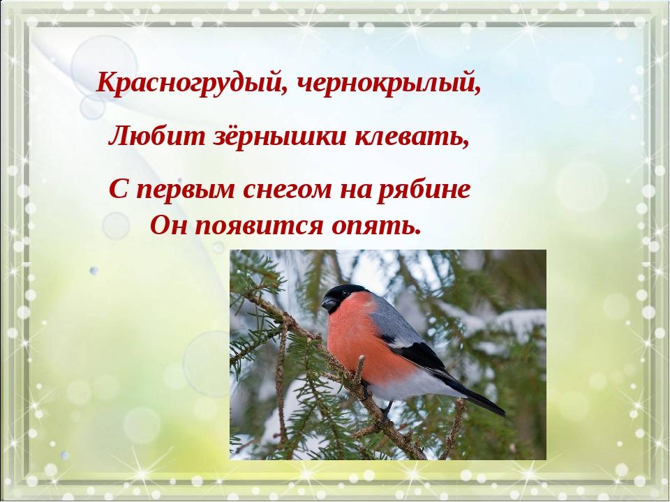 Красногрудый, чернокрылый, Любит зёрнышки клевать, С первым снегом на рябине...