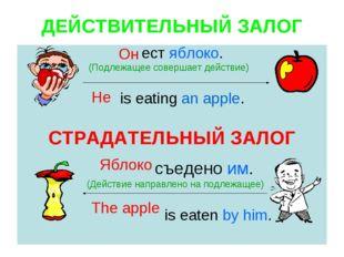 ДЕЙСТВИТЕЛЬНЫЙ ЗАЛОГ ест яблоко. (Подлежащее совершает действие) is eating an