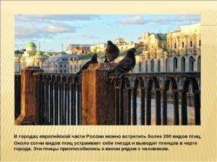 В городах европейской части России можно встретить более 200 видов птиц. Око