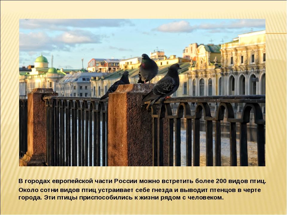 В городах европейской части России можно встретить более 200 видов птиц. Око...
