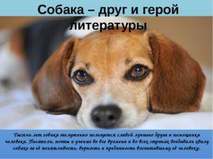 Собака – друг и герой литературы Тысячи лет собака заслуженно пользуется слав