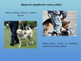 Какие же «профессии» есть у собак? Собаки-поводыри известны с древних времен