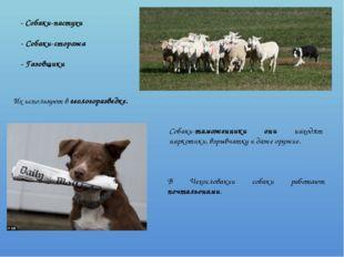- Собаки-пастухи - Собаки-сторожа - Газовщики Их используют в геологоразведк