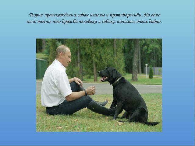 Теории происхождения собак неясны и противоречивы. Но одно ясно точно, что др...