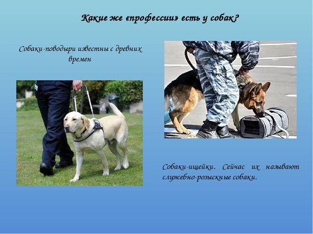 Какие же «профессии» есть у собак? Собаки-поводыри известны с древних времен...