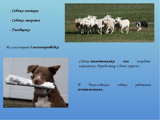 - Собаки-пастухи - Собаки-сторожа - Газовщики Их используют в геологоразведк...