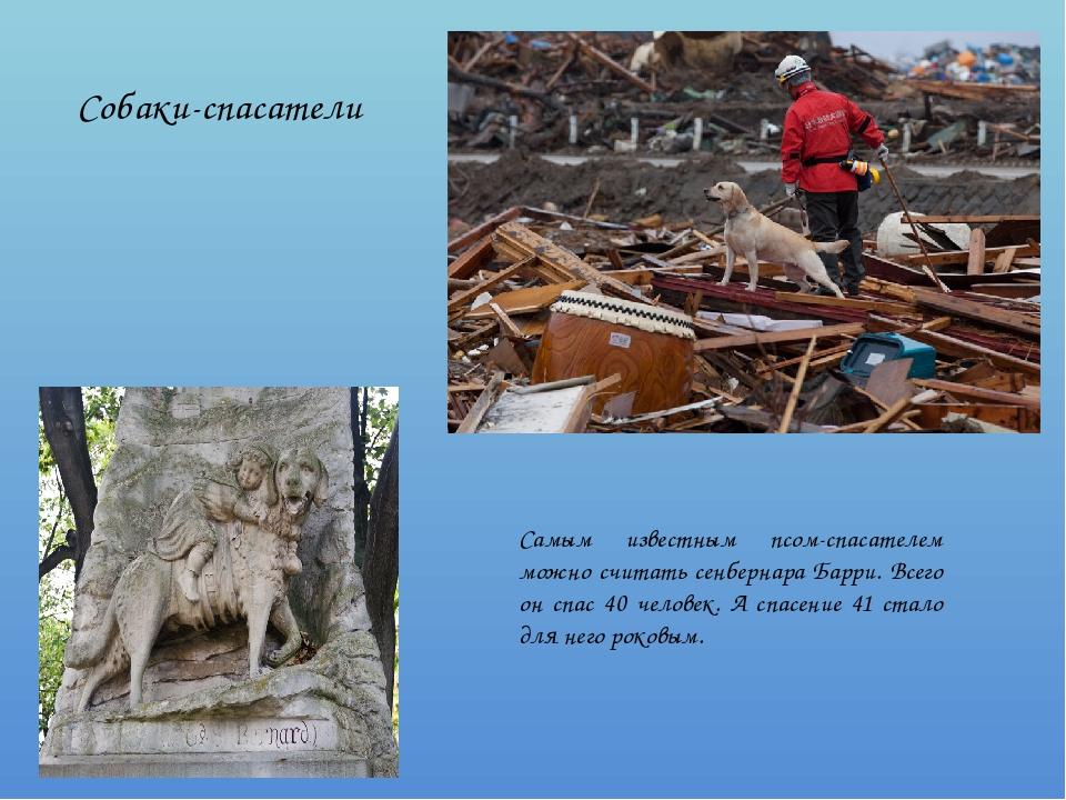 Собаки-спасатели Самым известным псом-спасателем можно считать сенбернара Бар...