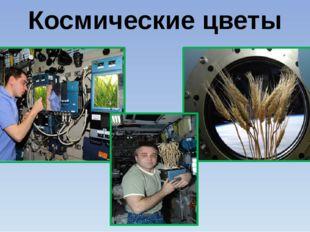 Космические цветы Присутствие на космическом корабле человека вывело исследов