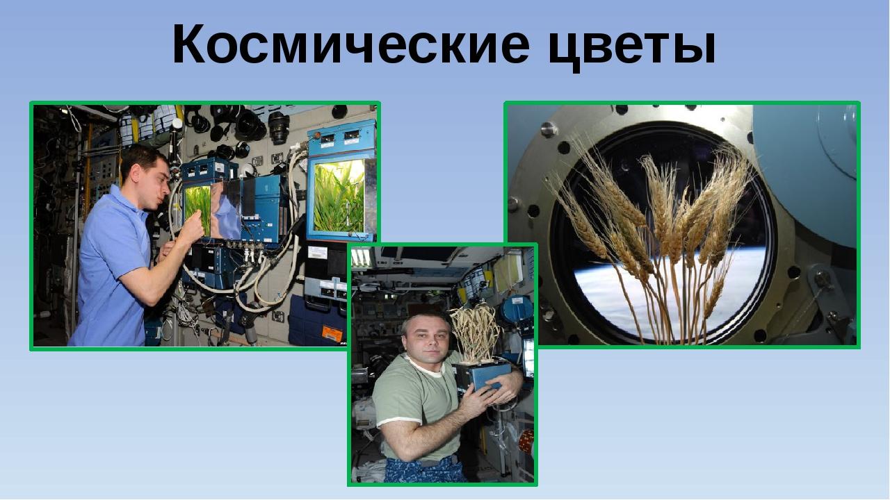 Космические цветы Присутствие на космическом корабле человека вывело исследов...