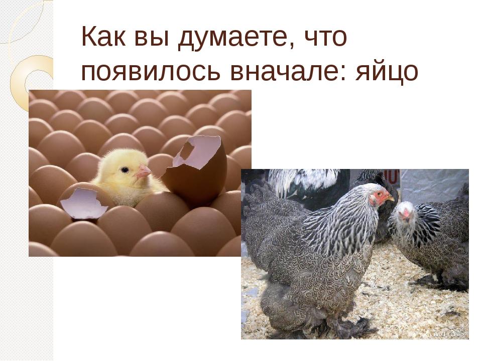 Как вы думаете, что появилось вначале: яйцо или курица?