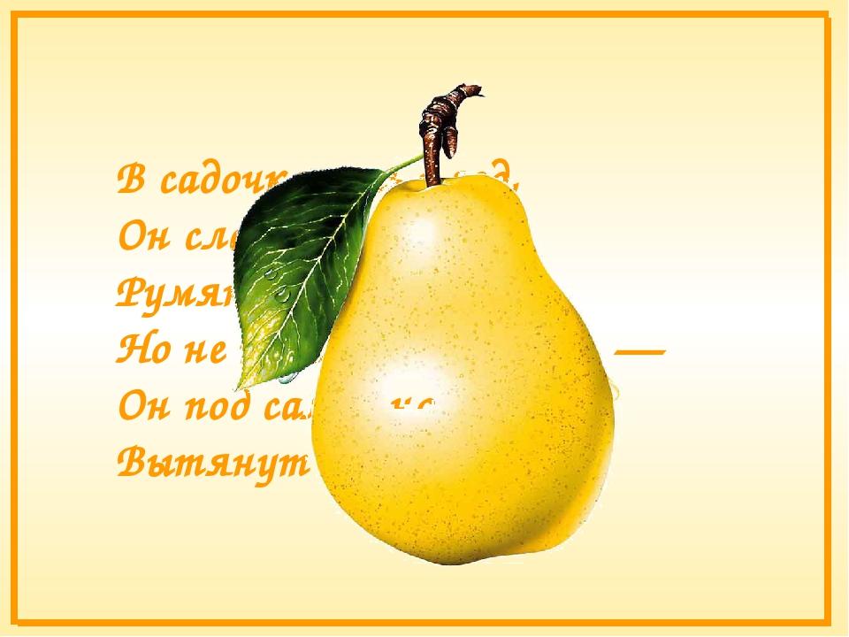 В садочке есть плод, Он сладок, как мёд, Румян, как калач, Но не круглый, как...