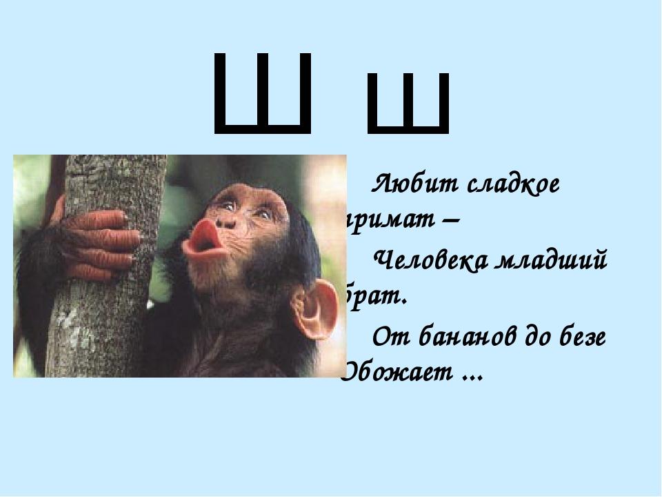 Ш ш Любит сладкое примат – Человека младший брат. От бананов до безе Обожа...