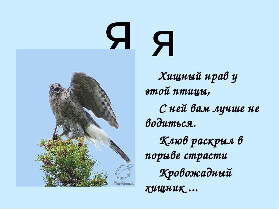 Я я Хищный нрав у этой птицы, С ней вам лучше не водиться. Клюв раскрыл в...