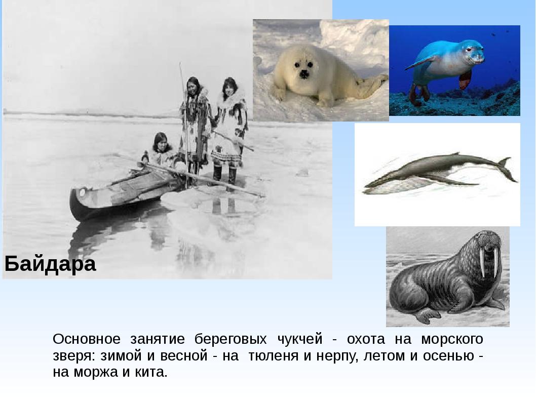 Основное занятие береговых чукчей - охота на морского зверя: зимой и весной -...