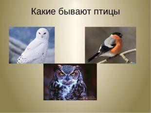 Какие бывают птицы