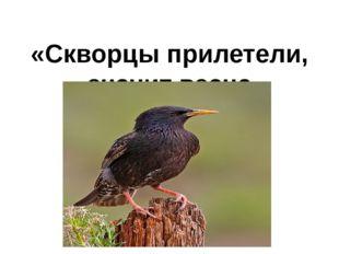 «Скворцы прилетели, значит весна пришла!»