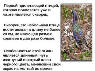 Первой прилетающей птицей, которая появляется уже в марте является скворец.