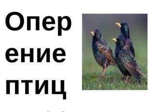 Оперение птиц имеет темно-черный цвет как у самцов, так и у самок. В зимнее