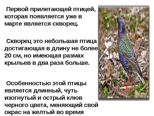 Первой прилетающей птицей, которая появляется уже в марте является скворец....