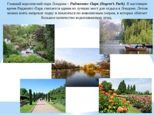 Главный королевский парк Лондона – Риджентс-Парк (Regent's Park). В настоящее