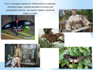 Есть в зоопарке павильон с бабочками из основных регионов мира, а рядом наход