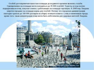 Особой достопримечательностью площади до недавнего времени являлись голуби. О
