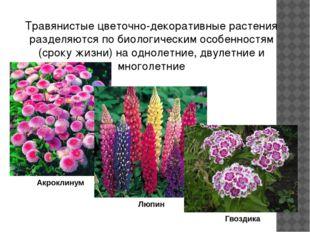 Большинство летников свето- и теплолюбивые растения. Они предпочитают умеренн