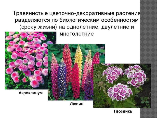 Большинство летников свето- и теплолюбивые растения. Они предпочитают умеренн...