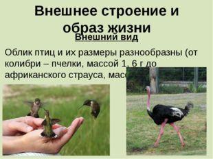 Внешнее строение и образ жизни Внешний вид Облик птиц и их размеры разнообраз