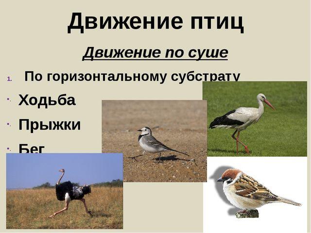 Движение птиц Движение по суше По горизонтальному субстрату Ходьба Прыжки Бег