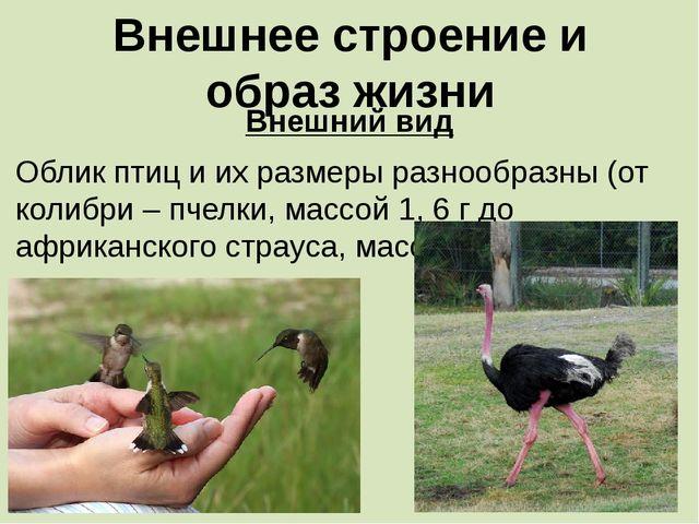 Внешнее строение и образ жизни Внешний вид Облик птиц и их размеры разнообраз...