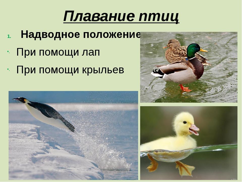 Надводное положение При помощи лап При помощи крыльев Плавание птиц
