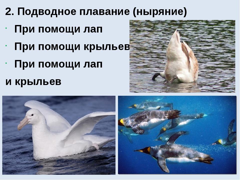 2. Подводное плавание (ныряние) При помощи лап При помощи крыльев При помощи...