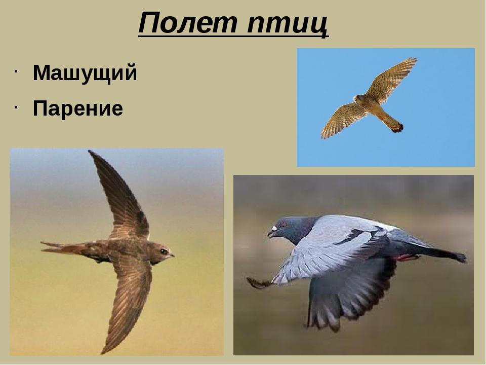 Полет птиц Машущий Парение