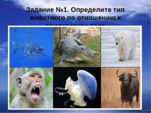 Задание №1. Определите тип животного по отношению к температуре тела
