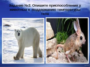 Задание №2. Опишите приспособления у животных к поддержанию температуры тела