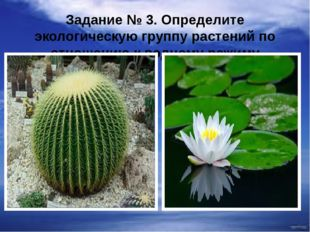 Задание № 3. Определите экологическую группу растений по отношению к водному