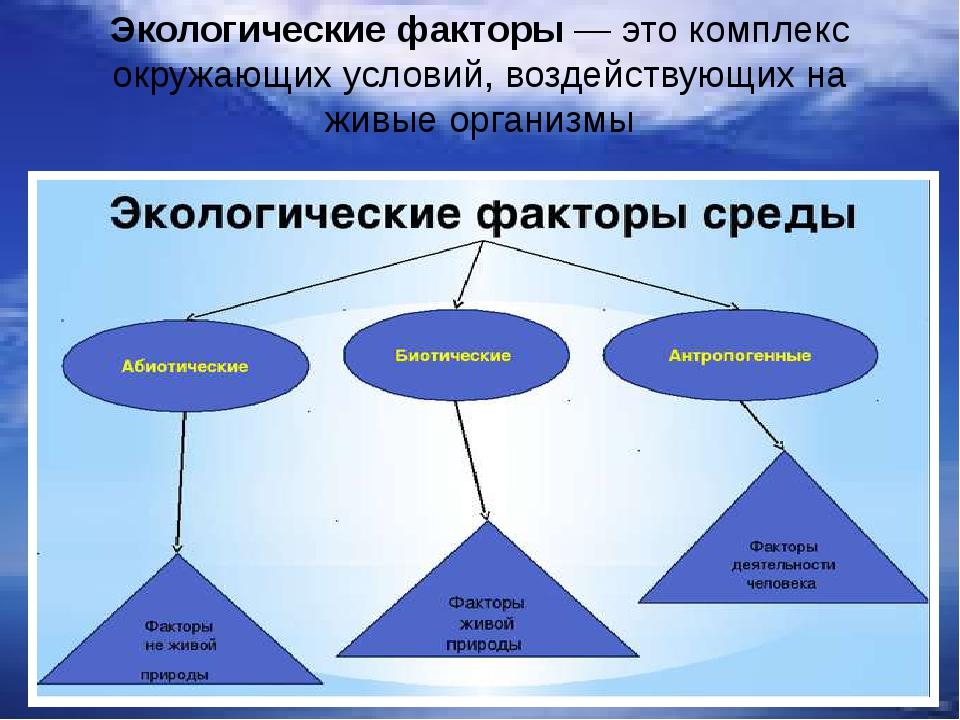 Экологическиефакторы— это комплекс окружающих условий,воздействующих на жи...