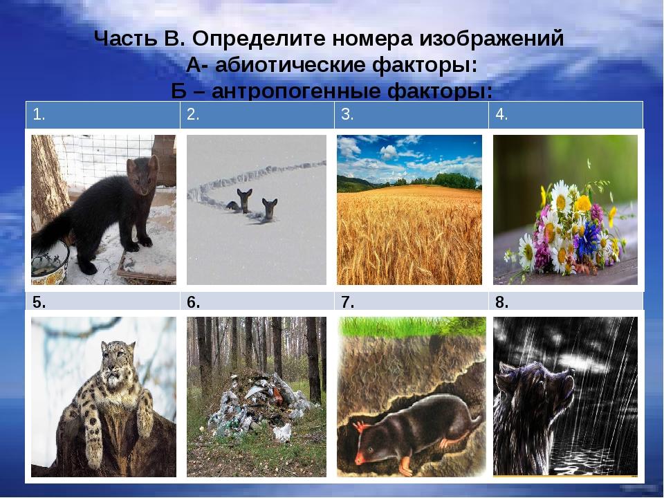 Часть В. Определите номера изображений А- абиотические факторы: Б – антропоге...