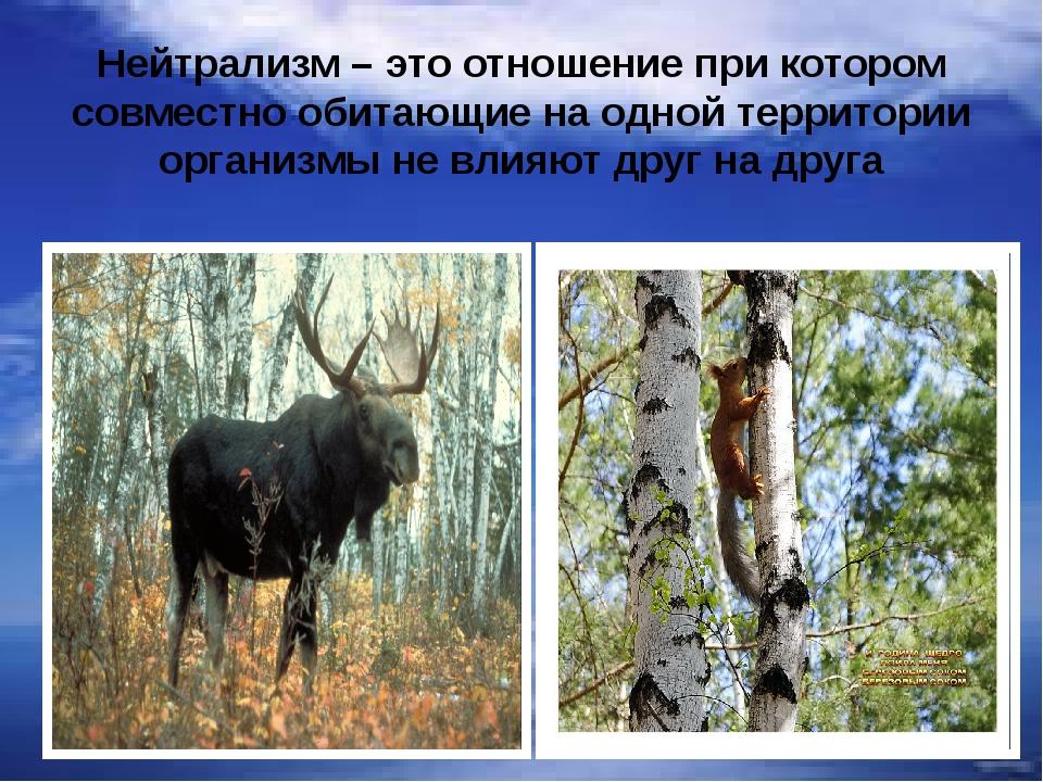 Нейтрализм – это отношение при котором совместно обитающие на одной территори...
