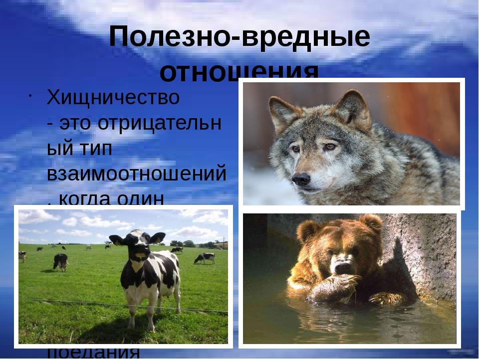Полезно-вредные отношения Хищничество -этоотрицательный тип взаимоотношений...