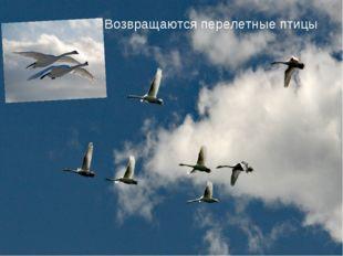 Возвращаются перелетные птицы