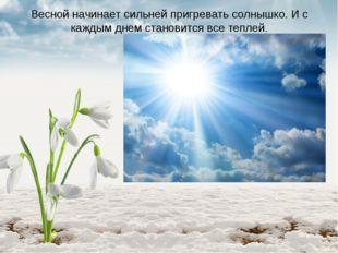 Весной начинает сильней пригревать солнышко. И с каждым днем становится все т