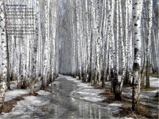 Весенние воды Ещё в полях белеет снег, А воды уж весной шумят — Бегут и будят
