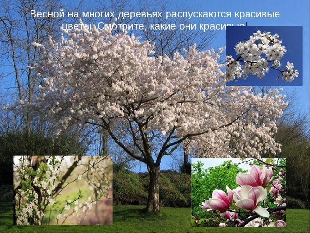 Весной на многих деревьях распускаются красивые цветы! Смотрите, какие они кр...