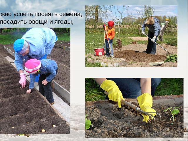 Нужно успеть посеять семена, посадить овощи и ягоды,
