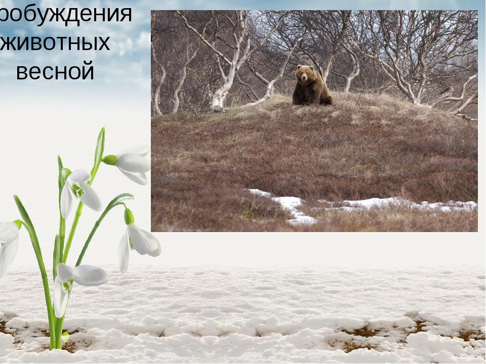 Пробуждения животных весной