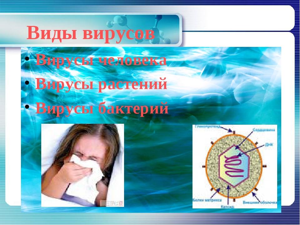 Виды вирусов Вирусы человека Вирусы растений Вирусы бактерий