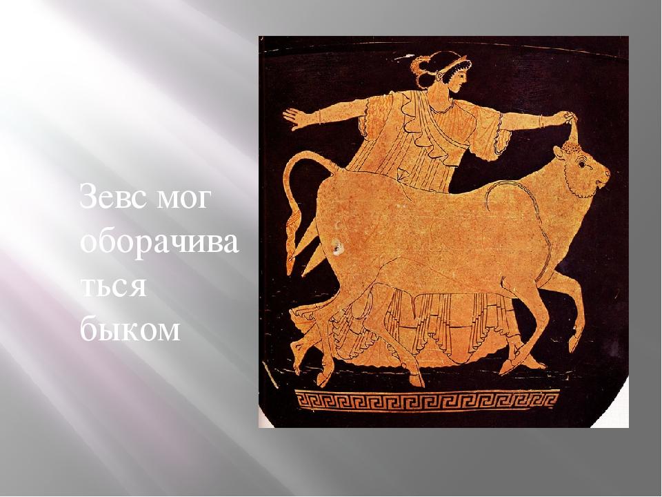 Зевс мог оборачиваться быком